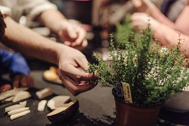 Seasonal herbs are the secret of good food